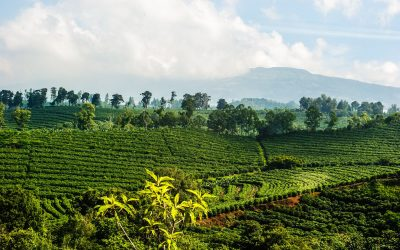 Costa Rica Coffee – a small country with great coffee